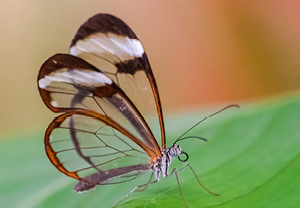 Glasswing Park