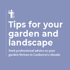 Tips for your garden and landscape