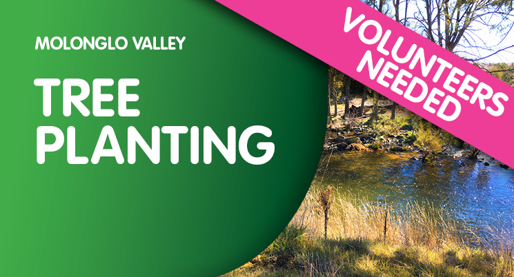 Molonglo Valley Tree Planting