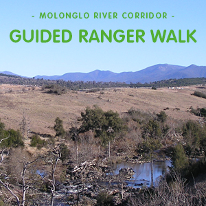 Guided Ranger Walk